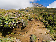 Volcanic ash layers (tuff), at Taranaki / Mount Egmont National Park, New Zealand, North Island