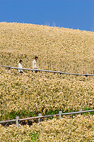 A couple make their way down a hill of bamboo grass on Hokkaido's Kamui on the Shakotan Peninsula Coast, Japan.