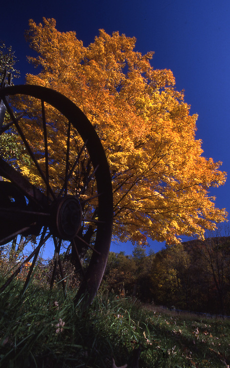 Americana, antique wagon wheel and autumn tree, Elk Co., PA