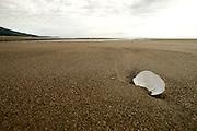 Shell on the beach at Lake Clark National Park, Alaska.