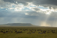 Serengeti plains<br /> Serengeti National Park<br /> Tanzania, Africa