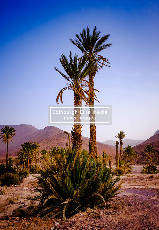 An oasis in the Moroccan desert near Foum El Oued<br /> <br /> (c) Andrew Wilson | Edinburgh Elite media