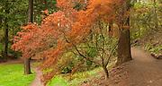 Enchanted forest in Mount Tabor Park, Portland, Oregon, USA. Test Nikon PC-E Nikkor 24mm f/3.5D ED