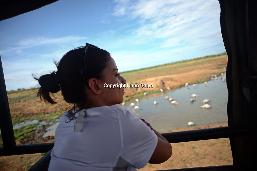 Young woman in safari jeep watching painted storks (Mycteria leucocephala) in the water. Udawalawe National Park, on the boundary of Sabaragamuwa and Uva Provinces, in Sri Lanka.