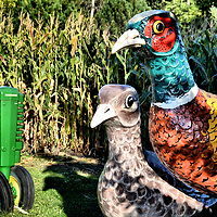 Pheasants and Deere Tractor at Storybook Land in Aberdeen, South Dakota<br />