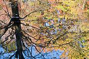 Autumn reflection, Lake County, Ohio