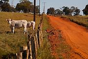 Carneirinho_MG, Brasil...Gado pastando em uma paisagem rural em Carneirinho, Minas Gerais...The cattle grazing in the rural landscape in Carneirinho, Minas Gerais...Foto: LEO DRUMOND / NITRO