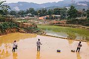 Planting rice shoots at a Dao village nearby La Vie Eco Resort, Thac Ba Lake