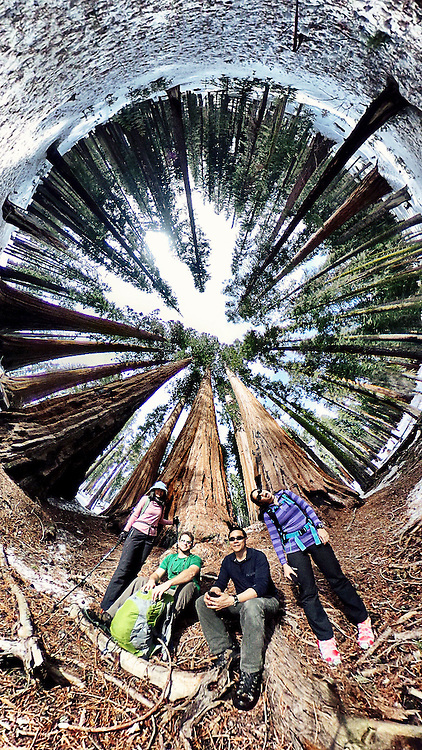 360 image of a really nice grove of sequoia trees. w/Kozy Kitchens + Dan Kitchens (Kozyndan), Eric Cheng, Nana Trongratanawong. Sequoia National Park, California.