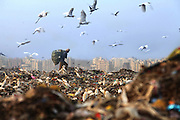 New Delhi, India - <br /> <br /> Garbage Mountain<br /> <br /> Just a few miles from the famous Akshardham temple, where tourists flock to see the structure's sandstone and marble work, the 29-hectare, slum-surrounded Ghazipur landfill in east Delhi seems a world apart. Each day hundreds of mainly migrant workers earn a meager living at the landfill by collecting recyclable material like plastic, metal and even hair to sell. The dump is the last port of call for Delhi's trash, having already been picked through by other waste collectors who collect bags of garbage directly from homes. Delhi is home to three landfills where around 6,000 tons of trash is dumped daily. Studies have shown that living near a landfill increases the risk of cancer, birth defects and asthma.<br /> <br /> Photo shows: A rag picker, which is someone who makes a living by rummaging through trash, carries a bag of recyclables at New Delhi's 70-acre Ghazipur landfill<br /> &copy;Chinky Shukla/Exclusivepix Media