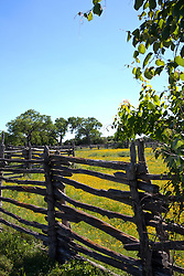 Framed by fields of yellow cone flowers and rustic split-rail fences, Johnson Settlement recreates a Texas farm as it might have looked from the 1840s through the 1920s.