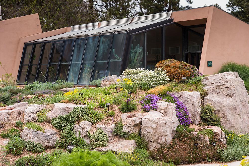 rock alpine garden in spring