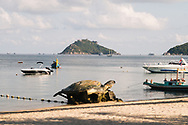 Koh Tao Turtle island in Thailand