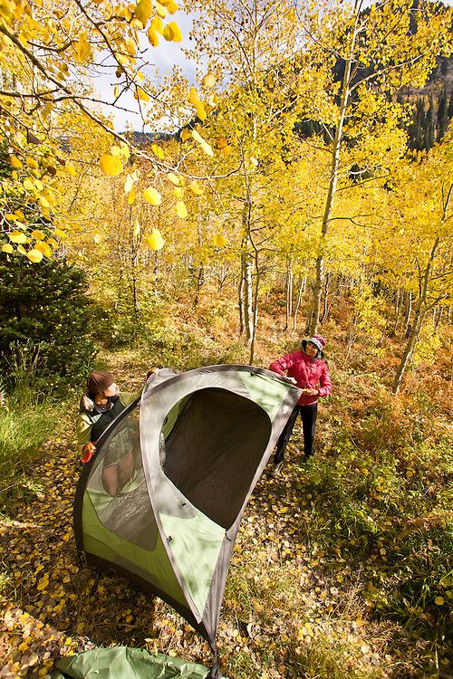 Two women campers set up their tent and sort gear amid autumn aspens in the Utah's Wasatch Mountains