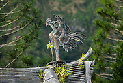 "One statue from a pair of ""Chinese phoenix,"" called Hou-ou (or Hoo-oo) in Japanese, raises its wings on the rooftop of the Amida Hall (Amida-do), also known as the Phoenix Hall (Hoo-do) at the 1968 Byodo-In Temple, in Valley of Temples Memorial Park, island of Oahu, Hawaii, USA. The legend of the Chinese phoenix, a male and female pairing called Fenghuang, arose 7000+ years ago (whereas the later Greek myth of the Western world's phoenix derived independently from ancient Egypt and Arabia). Peaceful Byodo-In Temple is in Valley of the Temples Memorial Park, at 47-200 Kahekili Highway in Kaneohe, Oahu. Byodo-In Temple (""Temple of Equality"") was built in 1968 to commemorate the 100 year anniversary of the first Japanese immigrants to Hawaii. This Hawaii State Landmark is a non-practicing Buddhist temple which welcomes people of all faiths. The Byodo-In Temple in O'ahu is a half-scale replica of the Byodo-in Temple built in 1053 in Uji, Japan (a UNESCO World Heritage Site)."