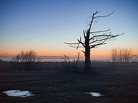 http://Duncan.co/silhouette-of-tree-before-dawn