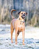 Charlie the Dog (Feb 17)
