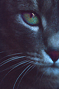 Green-eyed  Cat with crescent moon reflection in one eye