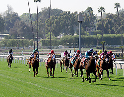 March 30, 2018 - Arcadia, California, USA - Horse Racing - Horse head for the first turn on the grass during the 8th race at Santa Anita Race Track, Arcadia, California, USA, March 29, 2018...Credit Image  cr Scott Mitchell/ZUMA Press (Credit Image: © Scott Mitchell via ZUMA Wire)