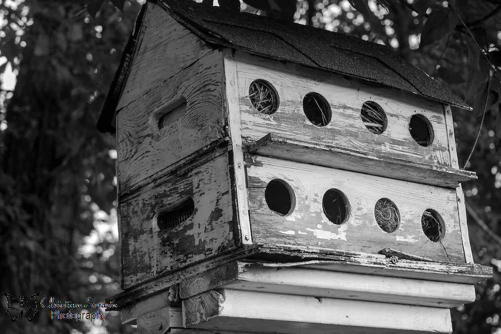 Martin Bird House image for sale, Purple Martins are the largest swallow in North America and are known as <br />