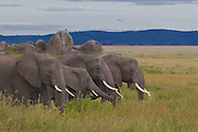 Elephant family, Serengeti National Park.