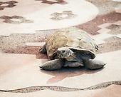 Tohono Chul & the Arizona-Sonora Desert Museum