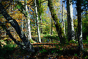 Forest trees and autumn colours. Plitvice National Park, Croatia