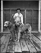 17/03/1960<br /> 03/17/1960<br /> 17 March 1960<br /> Irish Kennel Club Dog Show at the RDS, Ballsbidge, Dublin.