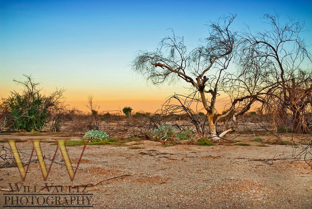 Arizona desert morning