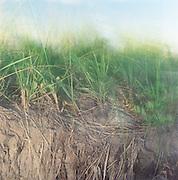 Dune grass lit at sunset