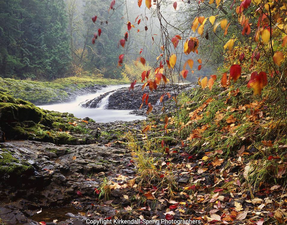 BB04588-01...WASHINGTON - Rainbow Falls on the Chehalis River at Rainbow Falls State Park.