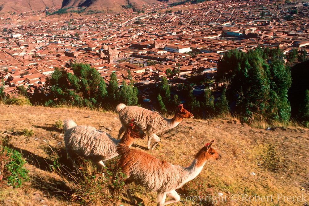 PERU, HIGHLANDS, CUZCO city with Plaza de Armas and llamas