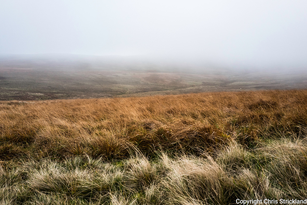 Looking east towards Green Law and Wedder Hill in the Cheviot Hills on a foggy November afternoon.