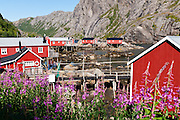 Red rorbus (fishermen's shanties for tourist holiday rentals) Nusfjord village, Lofoten archipelago, Nordland county, Norway.