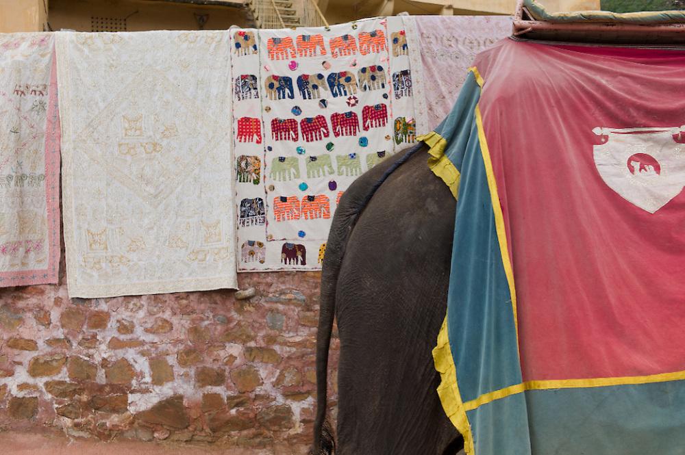 India-Jaipur Elephants
