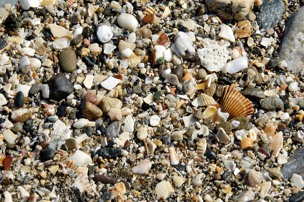 Shells on the beach, Algarve, Portugal