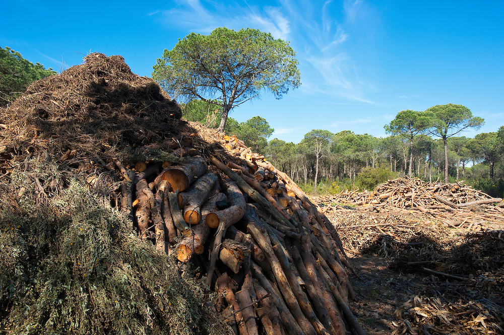 Tinder built into  charcoal mounds, before ignition, Andalucia, Spain