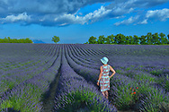 Woman in vintage dress standing in blooming lavender field near Valreas,Provence,France<br /> Model release 0350