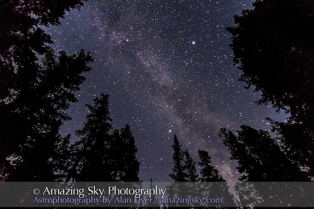 The Summer Triangle and summer Milky Way through trees, taken Sept. 8, 2012 from the Howse Pass overlook at Saskatchewan River Crossing. Taken in darkness but with clouds coming through. Taken with the Canon 7D camera at ISO 1600, and Canon 10-22mm lens at f/3.5 for 70 seconds. No tracking, Moon not up.
