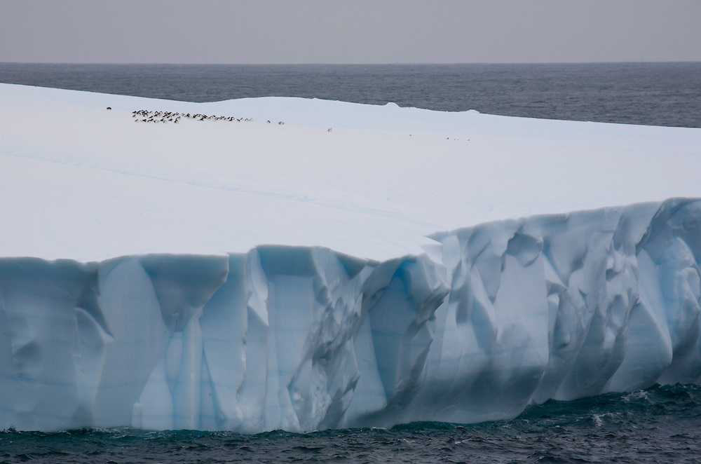 February 7th 2007. Southern Ocean. Birds rest atop an iceberg in the Ross Sea.