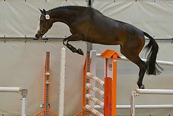 76 - Denolia<br /> KWPN Paardendagen 2011 - Ermelo 2011<br /> © Dirk Caremans