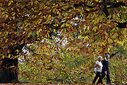 © Licensed to London News Pictures. 01/11/2011. Kew, UK. A couple walk through the trees. People enjoy the Autumn sunshine in Kew Gardens today, 1st November 2011. Parts of the UK are experiencing higher than average temperature for the time of year.  Photo credit : Stephen Simpson/LNP