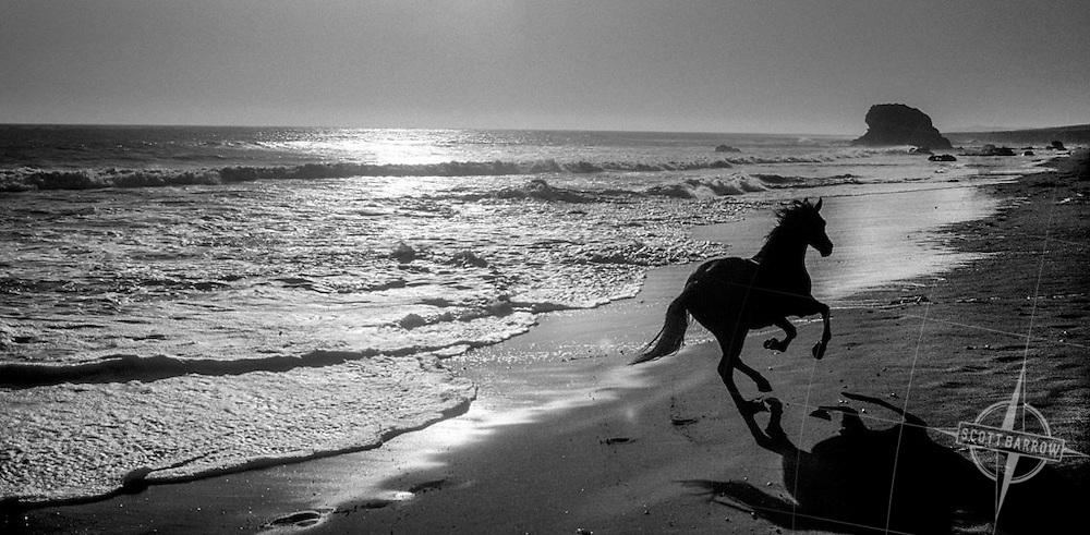 Galloping San Simeon