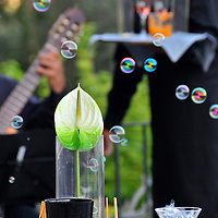 A general view of the waiter, guitarist and bubbles at a wedding in La Baronia, St Feliu de Codines, Barcelona.