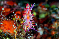 Neon Nudibranch