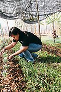 Owner Neeracha Wongmasa works in the organic garden at Phunacome resort