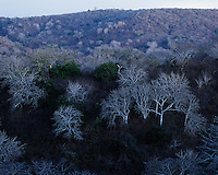 Bosque seco al sur de Manta