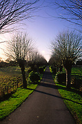A5EWYC Long straight tree lined avenue leading to a cemetery Wickham Market Suffolk England