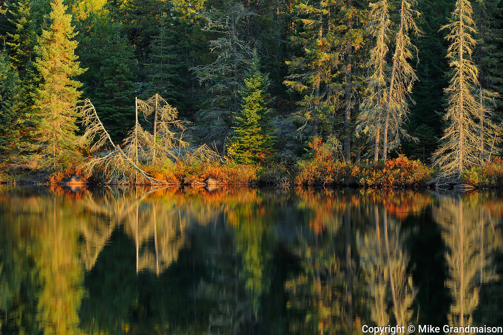 Shoreline along Isabel Lake<br />