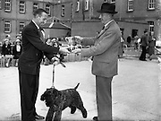 """19/07/1952<br /> 07/19/1952<br /> 19 July 1952<br /> Dog show: All Breed Championship, 10th Annual Show of the Combined Canine Clubs at Terenure College,<br /> Templeogue Road Terenure Dublin. The Hon. Mr Justice Shannon presenting the Cup for Best in Show to Mr P. McDonnell, 15 Harrogate Street, Springfield Road, Belfast for his Kerry Blue terrier """"Duellist Macdon""""."""